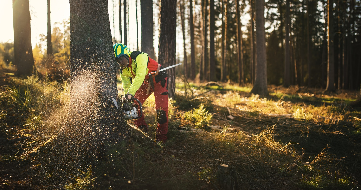 Logger man cutting