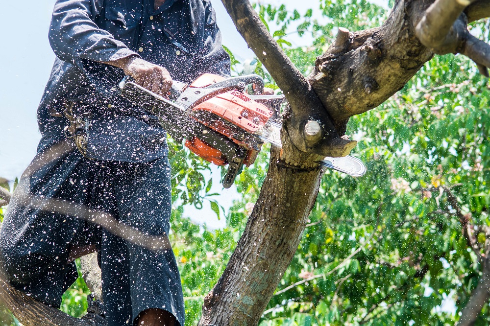 man using a sharp chainsaw