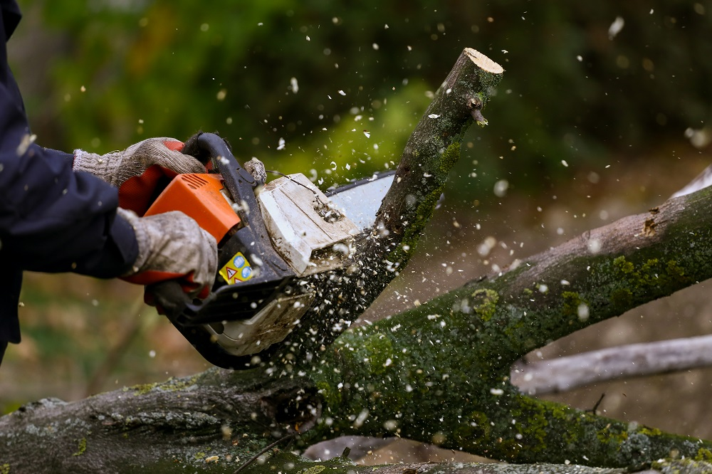 testing a sharpened chainsaw