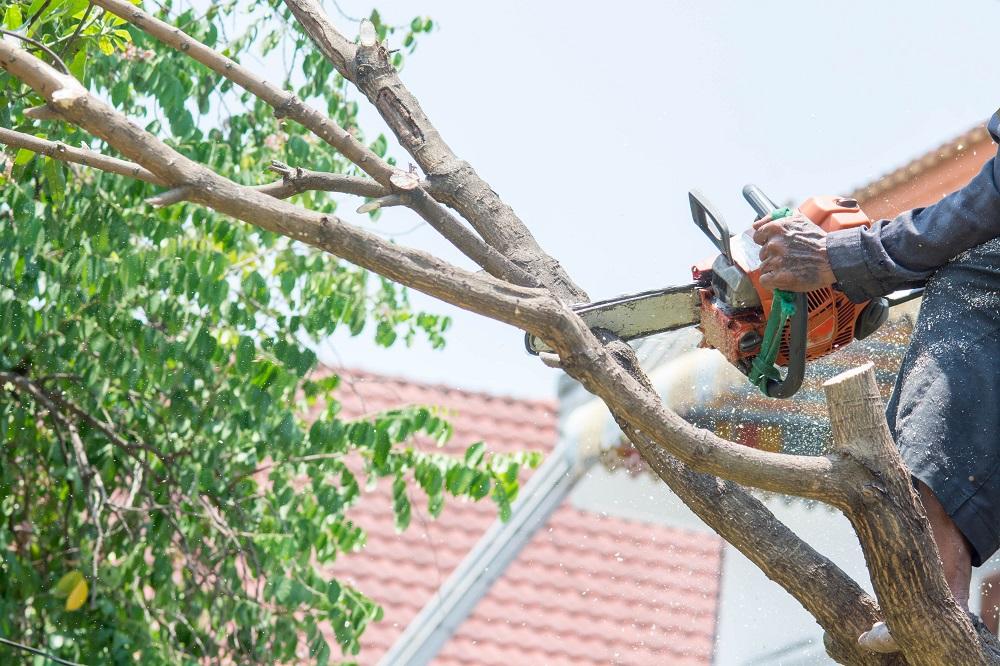 cutting down a tree using a chainsaw