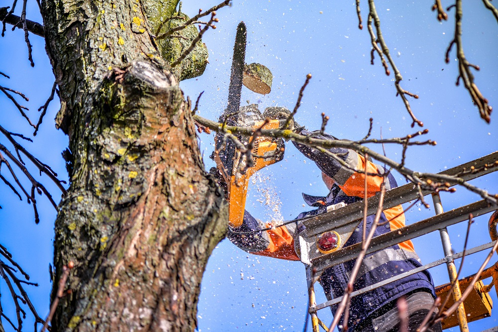 Tree pruning and sawing