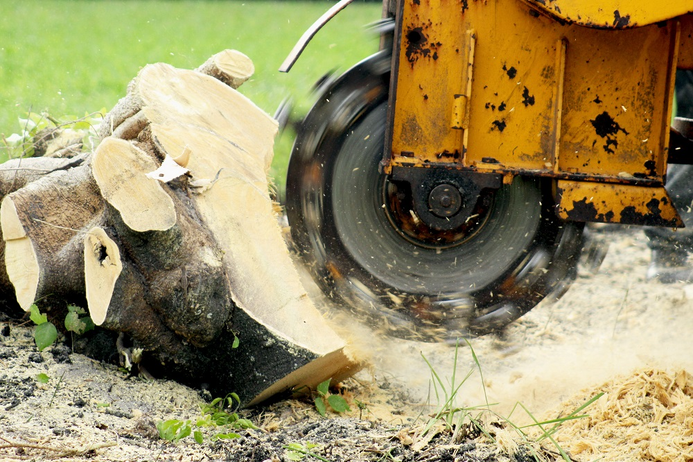 using a stump grinder