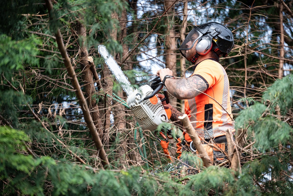 man taking caution in felling the tree