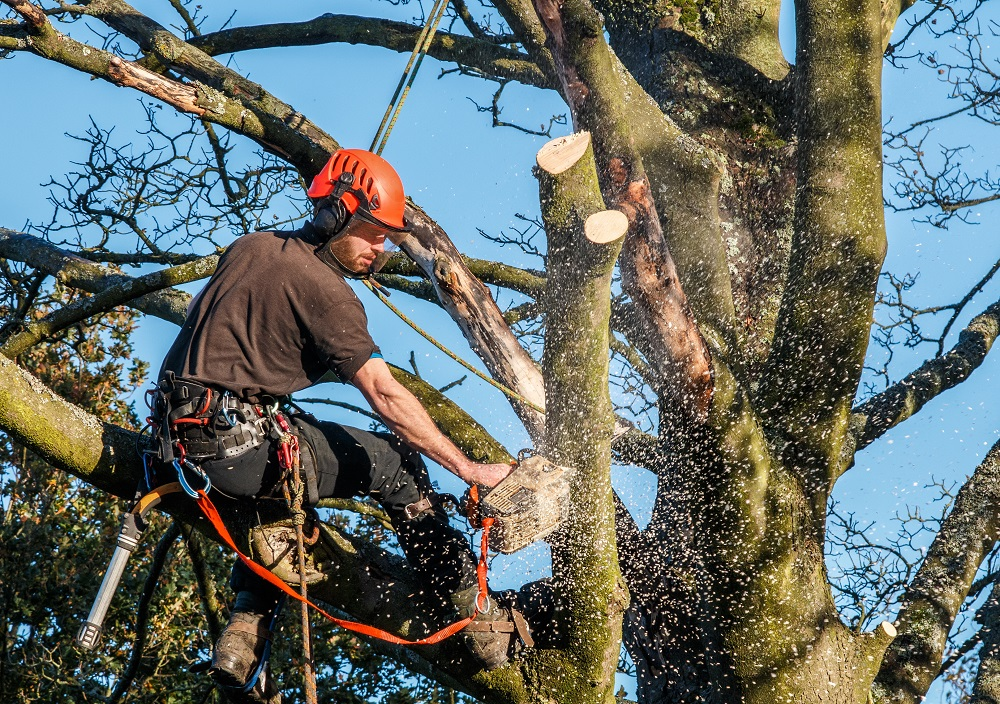 arborist wearing a safety gear